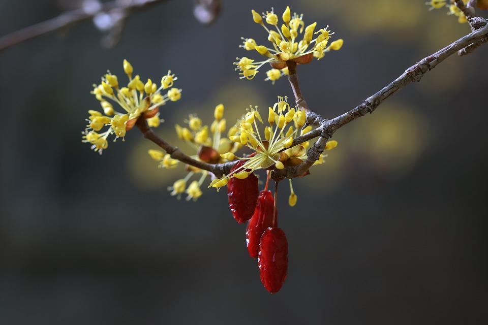 spring-4060409_960_720.jpg
